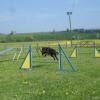 2009_agility_DSC03771