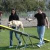 2009_agility_DSC_0107
