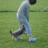 2009_dogdancing_DSC03736