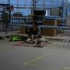 2009_dogdancing_schnuppi_DSC03585