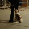 2009_dogdancing_schnuppi_DSC03607