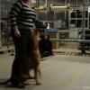 2009_dogdancing_schnuppi_DSC03614