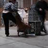 2009_dogdancing_schnuppi_DSC03622