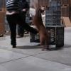 2009_dogdancing_schnuppi_DSC03623