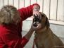 Hundeführerschein 2008