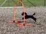 micadog / nadac / hoopers agility 2020