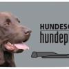 2020_hundeplus_schnappschuesse_IMG_9060