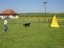 Sporthunde 2010