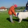 2008_therapiehunde_DSCN2825