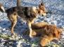 Welpen und Junghunde 2017