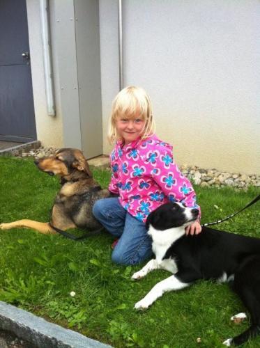 Therapiehunde Hutch und Trixi