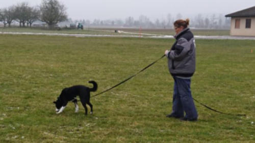 Hundeplus Faehrten IMG 3737