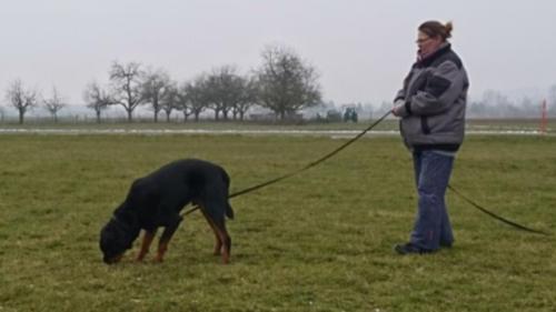 Hundeplus Faehrten IMG 3739